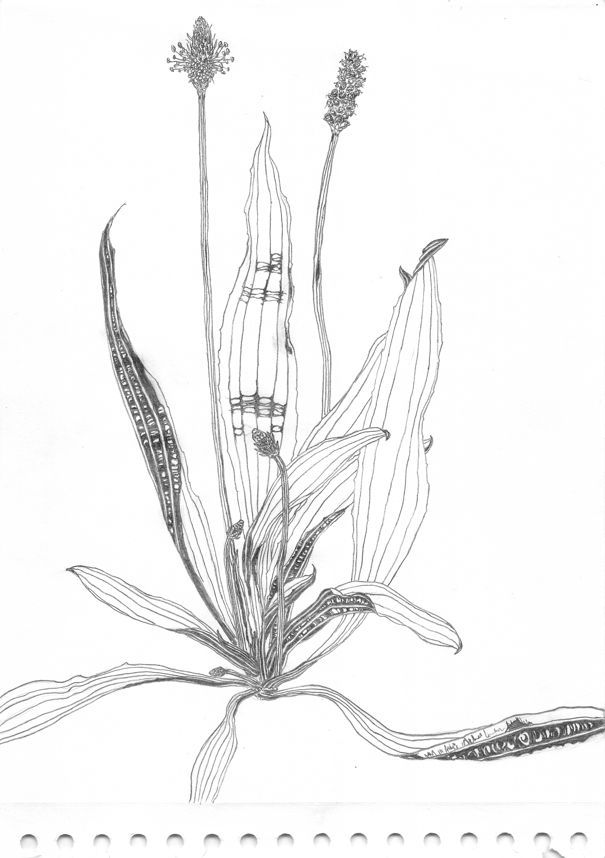 Pflanzenportrait (600 dpi) 07